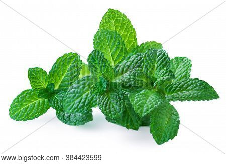 Peppermint Leaves Isolated On White Background. Fresh Spearmint Or Mint Leaves  Close Up