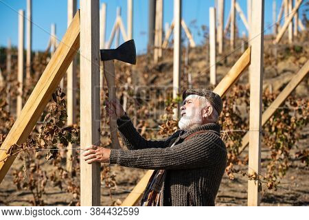 Professional Work With Axe. Vineyard In Valley. Outdoor Portrait. Bearded Man Repair Vineyard With A