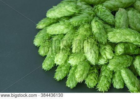 Green Hops Cones On Black Background. Freshly Harvested Hops Flowers For Beer Making / Green Fresh H