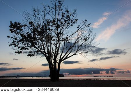 Tree silhouette from beach with nice morning colors on sky