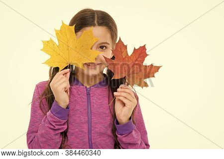 Fall Colors Are Funny. They Are So Bright And Intense And Beautiful. Kid Girl Hold Fallen Maple Leav