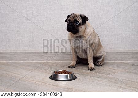 Cute Small Dog Sitting And Waiting To Eat His Bowl Of Dog Food. Pets Indoors. Concept
