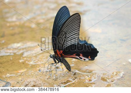 The Most Beautyfull Butterfly White Background Asia Butterfly