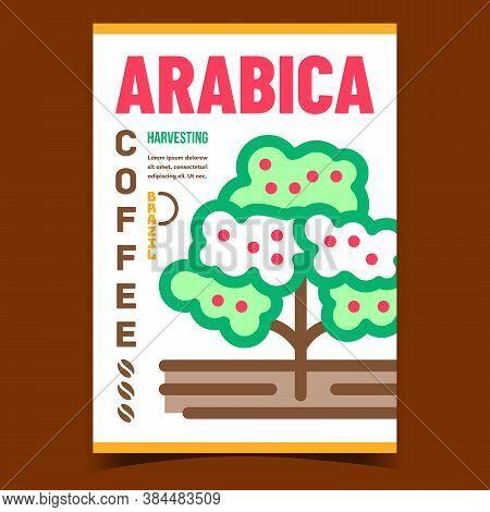 Arabica Coffee Creative Advertising Banner Vector. Coffee Plant Plantation Harvesting Promotional Po
