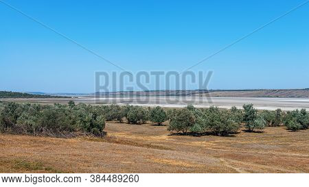 Steppe Landscape. Lonely Green Treess On Dry Hot Sand. Ravine In The Steppe.