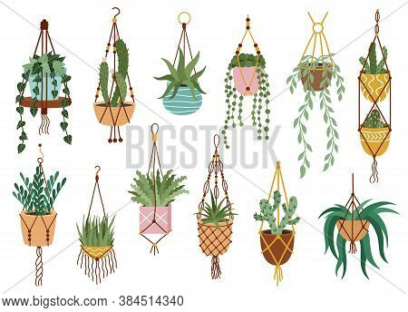 Plant In Hanging Pots. Houseplant Hang On Rope, Decorative Indoor Plants, Macrame Flower Pots, Home