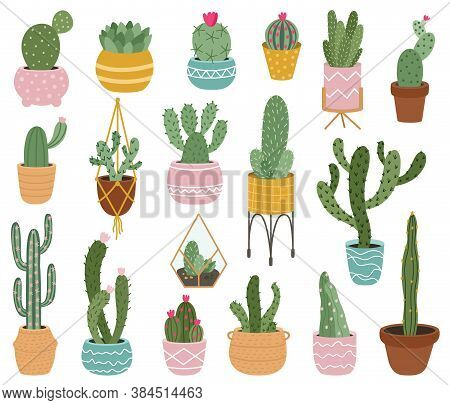 Potted Cactus. Cute Desert Cactus, Succulents And Aloe In Pots, Tropical Home Plants, Mexican Prickl