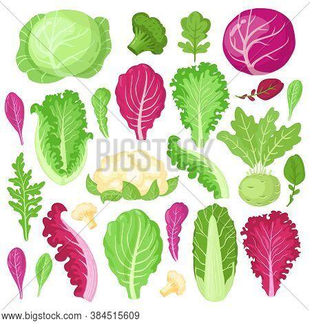 Cartoon Cabbage. Cauliflower, Kale, Broccoli And Lettuce Leaves, Organic Vegetarian Diet Salad Green