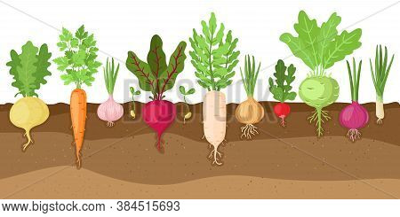 Planted Vegetables. Cartoon Root Growing Vegetables, Veggies Fibrous Root System, Soil Vegetable Roo
