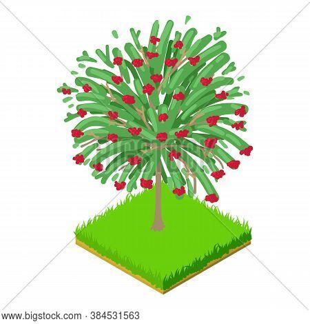 Hawthorn Tree Icon. Isometric Illustration Of Hawthorn Tree Vector Icon For Web