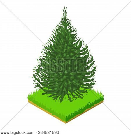 Balsam Fir Icon. Isometric Illustration Of Balsam Fir Vector Icon For Web