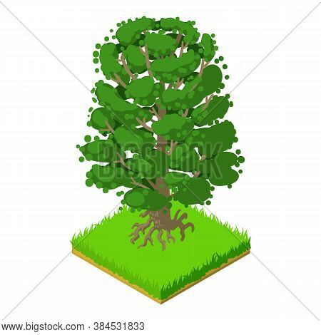 American Beech Icon. Isometric Illustration Of American Beech Vector Icon For Web
