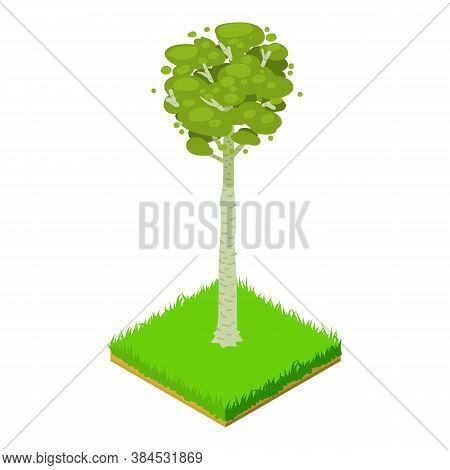 Bigtooth Aspen Icon. Isometric Illustration Of Bigtooth Aspen Vector Icon For Web