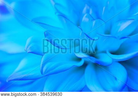Abstract Light Blue Floral Background. Dahlia Petals Close Up. Macro. Blurred Image, Soft Focus. Clo