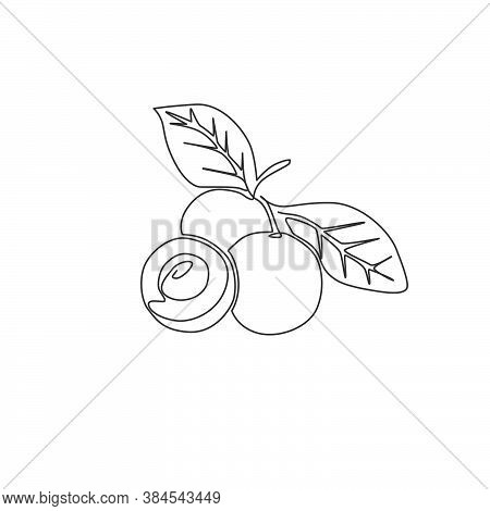 Single Continuous Line Drawing Of Whole And Cut Healthy Organic Longan For Orchard Logo Identity. Fr