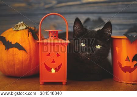 Black Cat And Pumpkin,  Jack O Lantern Pail And Bats On Dark Wooden Background.happy Halloween. Scar