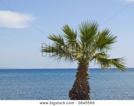 Palmtree Against Blue Sea And Sky