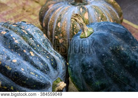 Black And Orange Pumpkin Bunch. Vegetable Peel Texture. Ripe Squash Closeup Photo. Autumn Season Bac