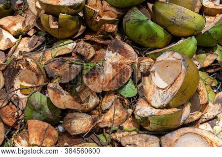 Green Coconut Shells Pile. Coconut Cooking Process. Coco Meat Plant Trash Pile.cleaning Coconuts Con