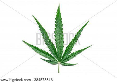 Green Hemp Leaf Isolated On White Background. Growing Medical Marijuana Plant. Marijuana Cannabis Pl