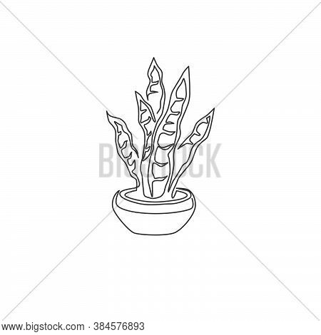 One Continuous Line Drawing Of Potted Snake Plant For Home Decor Logo Identity. Fresh Evergreen Pere