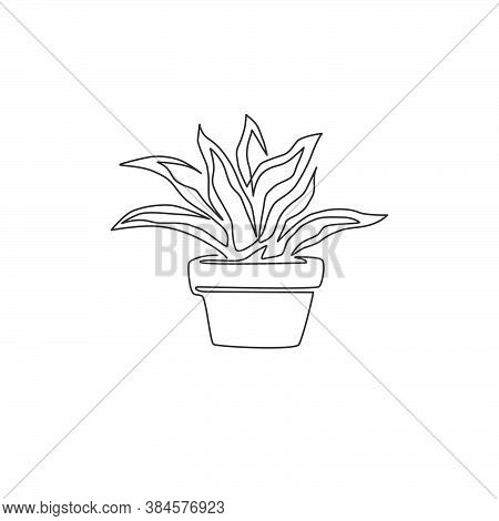 One Single Line Drawing Of Potted Snake Plant For Home Decor Logo Identity. Fresh Evergreen Perennia