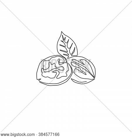 Single Continuous Line Drawing Whole Healthy Organic Walnut And Leaves For Orchard Logo Identity. Fr
