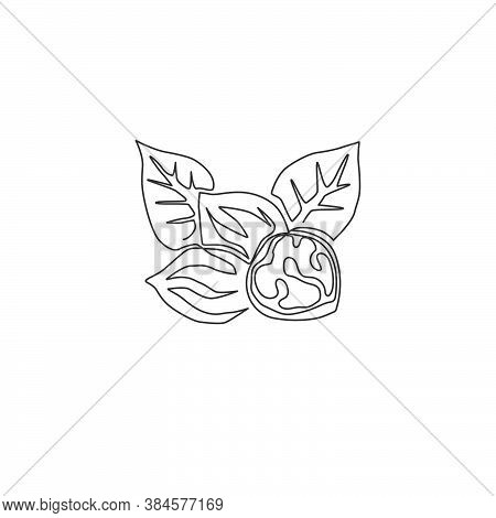 One Single Line Drawing Of Whole Healthy Organic Walnut Food And Leaves For Orchard Logo Identity. F