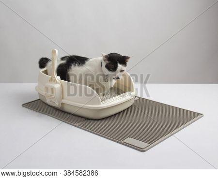 Black And White Cat In Plastic Litter Cat On Litter Cat Mat On White Background