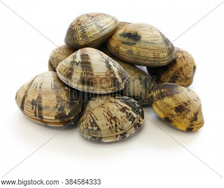 asari clams, It's a kind of clam that's popular in Japan.