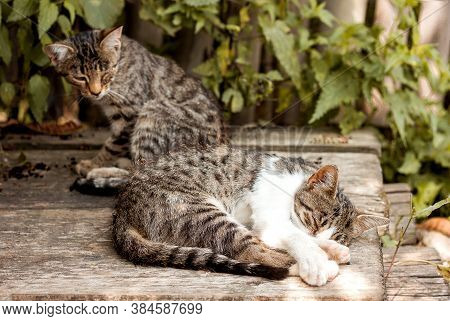 Two Cats Bask In The Sun Little Kittens Sleep On The Boards A Cat With One Eye