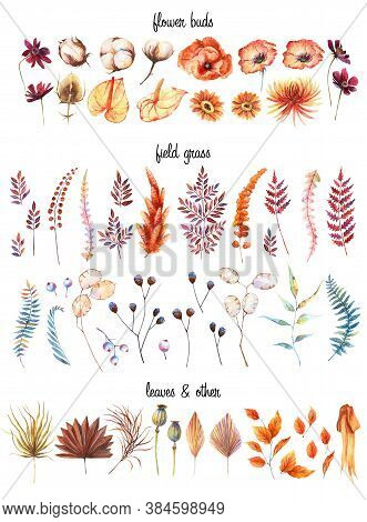 Watercolor Rustic Dried Autumn Floral Set. Palm Leaf, Terracotta Wild Grass And Field Flowers, Poppy