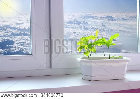 Oak Sapling In Flowerpot On Window Sill Overlooking Clouds. Scenery Seen From Window. Heavenly Panor