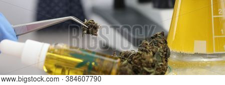 Cannabis Samples On Table In Medical Laboratory. Cannabidiol Is Recognized As A Treatment For Epilep