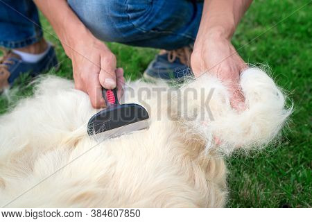 Close-up Of Golden Retriever Hair In The Hands Of A Man, Which He Combed With A Special Veterinary T