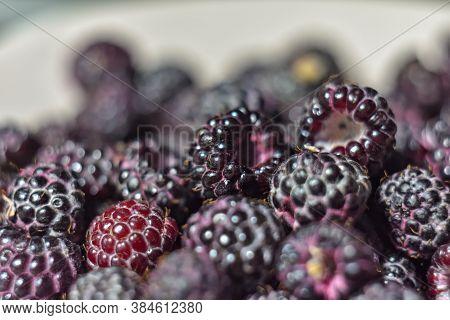 Black Raspberry Close-up, Macro Black Berry, Raspberry