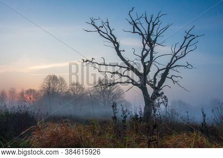 Scenery Autumn Of Meadow And Lonely Tree In Misty Morning. Red Sunrise. Dead Tree On Meadow. Tree Wi