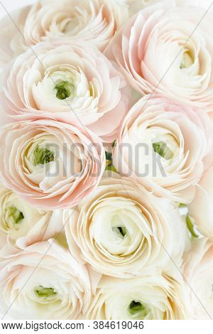 Bouquet, Texture Of Pink Ranunculus And Roses Flower Close Up. Flat Lay, Top View. Ranunculus Flower