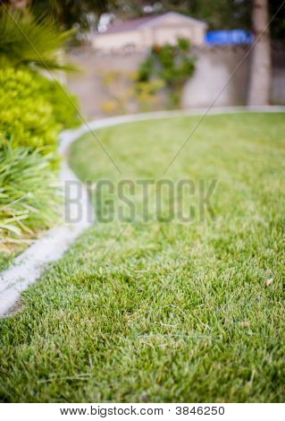 Grass Landscaped Yard