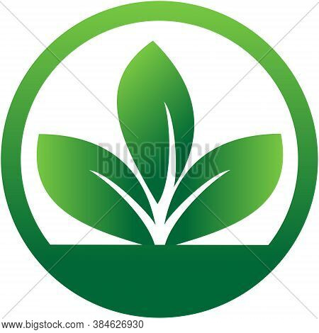Three Leaf Logo Vector In Circle. Leaves Logo. Nature Leaf Logo. Eco Leaf Logo. Leaf Sign. Leaf Symb