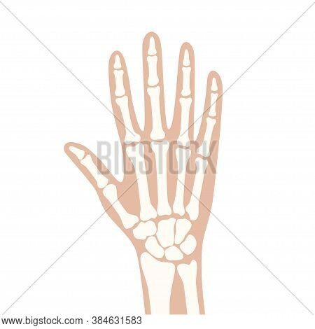 Normal Hand On X Ray Scanning. Medical Exam For Symptoms With Human Joints And Bones. Skeleton Scan