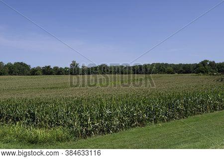 Cornfieldbeautiful Environment Landscape Of Green Field Cornfield, And Sky Cornfield Blue Sky