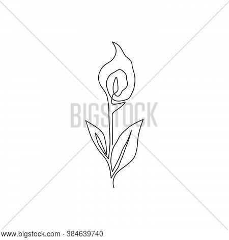 Single One Line Drawing Beauty Fresh Zantedeschia For Garden Logo. Printable Decorative Arum Lily Fl