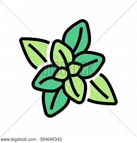Peppermint Aromatherapy Color Icon Vector. Peppermint Aromatherapy Sign. Isolated Symbol Illustratio
