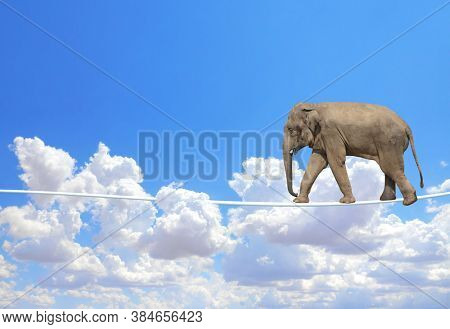 Managing risk concept. Elephant walking on a rope on the blue sky background. Cute elephant on tightrope above the clouds