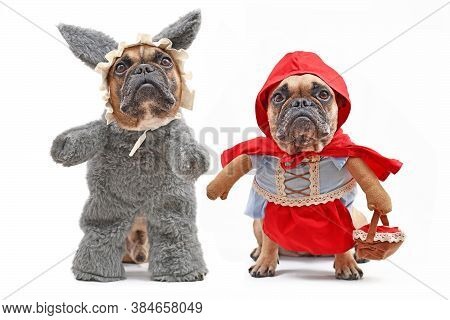 French Bulldogs Dressed Up As Fairytale Characters Little Red Riding Hood And Bad Wolf With Full Bod