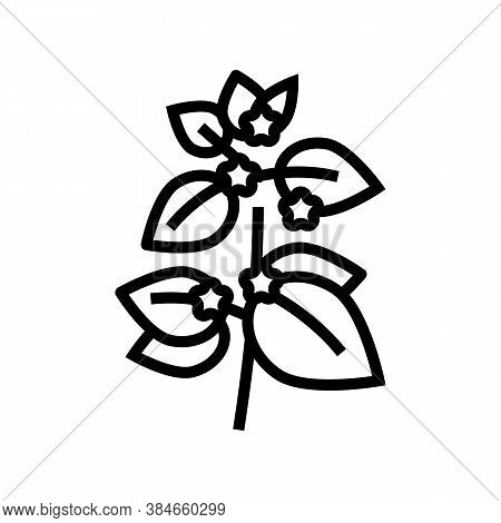 Melissa Herbal Aromatherapy Line Icon Vector. Melissa Herbal Aromatherapy Sign. Isolated Contour Sym