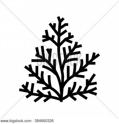 Cedar Plant Aromatherapy Line Icon Vector. Cedar Plant Aromatherapy Sign. Isolated Contour Symbol Bl