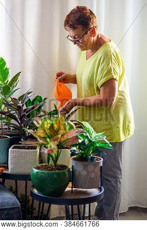 Senior Woman Watering Houseplants In Her Lovely Home Garden. Woman Caring For House Plant. Selective