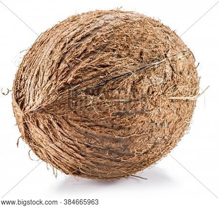 Coconut - large brown tropical fruit isolated on white background.